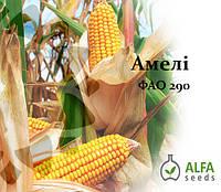 Семена кукурузы Амели ФАО 290, фото 1