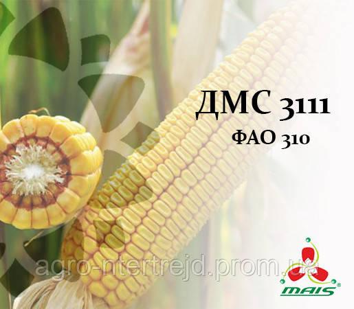 Семена кукурузы ДМС 3111 ФАО 310