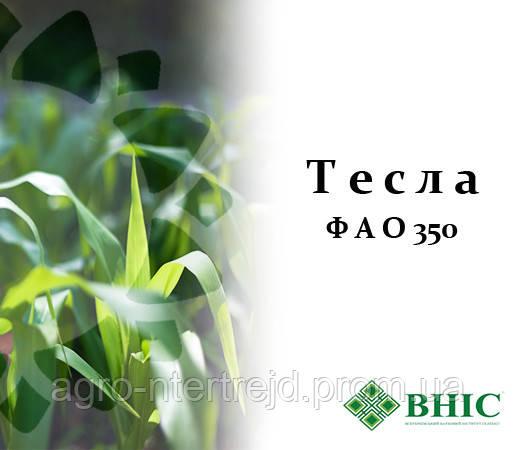 Семена кукурузы Тесла (ФАО 350) ВНИС