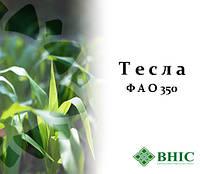Семена кукурузы Тесла (ФАО 350) ВНИС, фото 1