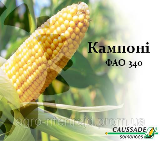 Семена кукурузы Кампони КС, ФАО 340