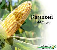 Семена кукурузы Кампони КС, ФАО 340, фото 1