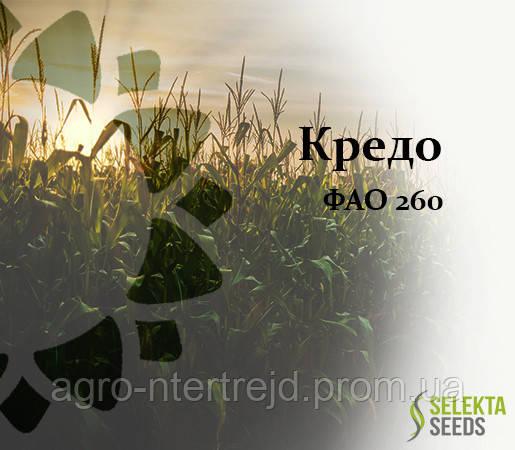 Семена кукурузы Кредо ФАО 260