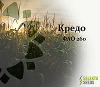 Семена кукурузы Кредо ФАО 260, фото 1