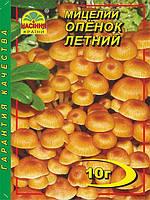 Мицелий гриба Опенок Летний, 10 г