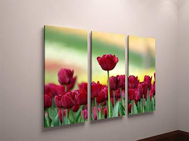 Фотокартина модульная фото картина с тюльпанами цветы тюльпаны на холсте холст