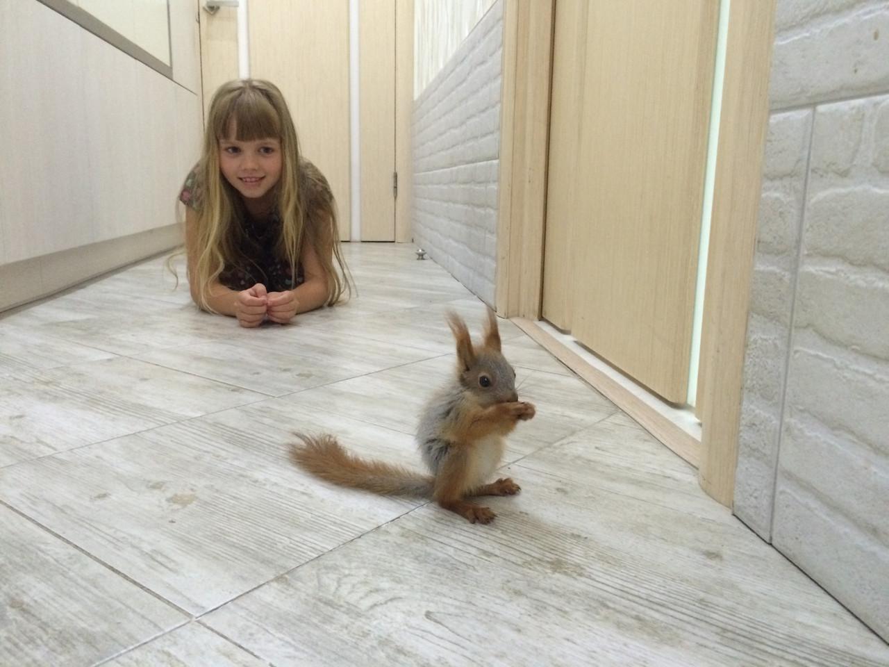Бельчата ручные на фотосессии - «Планета животных» в Киеве