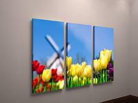 Модульная фото картина на холсте тюльпаны Голландия