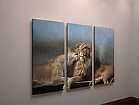 Модульная фото картина на холсте животные Львы лев фотокартина холст