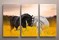 Фото картина модульная на холсте животные Кони Лошади пара фотокартина холст