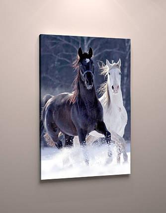 Фото картина на холсте животные Лошади пара модульная фотокартина холст кони, фото 2