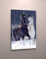 Фото картина на холсте животные Лошади пара модульная фотокартина холст кони