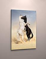 Фото картина на холсте животные Лошади пара фотокартина модульная кони холст