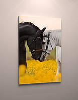 Фото картина модульная на холсте животные Лошади пара фотокартина кони холст