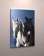 Фото картина модульная на холсте фотокартина животные Лошади холст кони пара