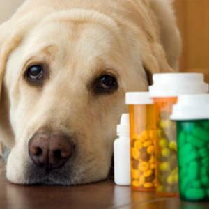 ветеринарні засоби та препарати, загальне