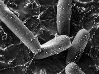 Наночастицы заменят антибиотики.