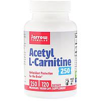 Ацетил карнитин, Acetyl L-Carnitine, Jarrow Formulas, 250 мг, 120 капсул