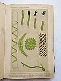 1913 Общая ботаника А.Натансон Книжный магазин Труд Одесса Дерибасовская, 25, фото 3