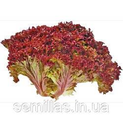 """Семена салата Конкорд, 100 сем., тип лолло россо, ТМ """"ЛедаАгро"""""""