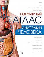 Популярный атлас анатомии человека Палычева Л.Н. Лазарев Н.В. (ASE000000000832024)