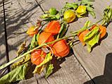 Физалис на ветке, натуральный сухоцвет,  3 ветки в букете, 10 плодов, 30 грн., фото 2