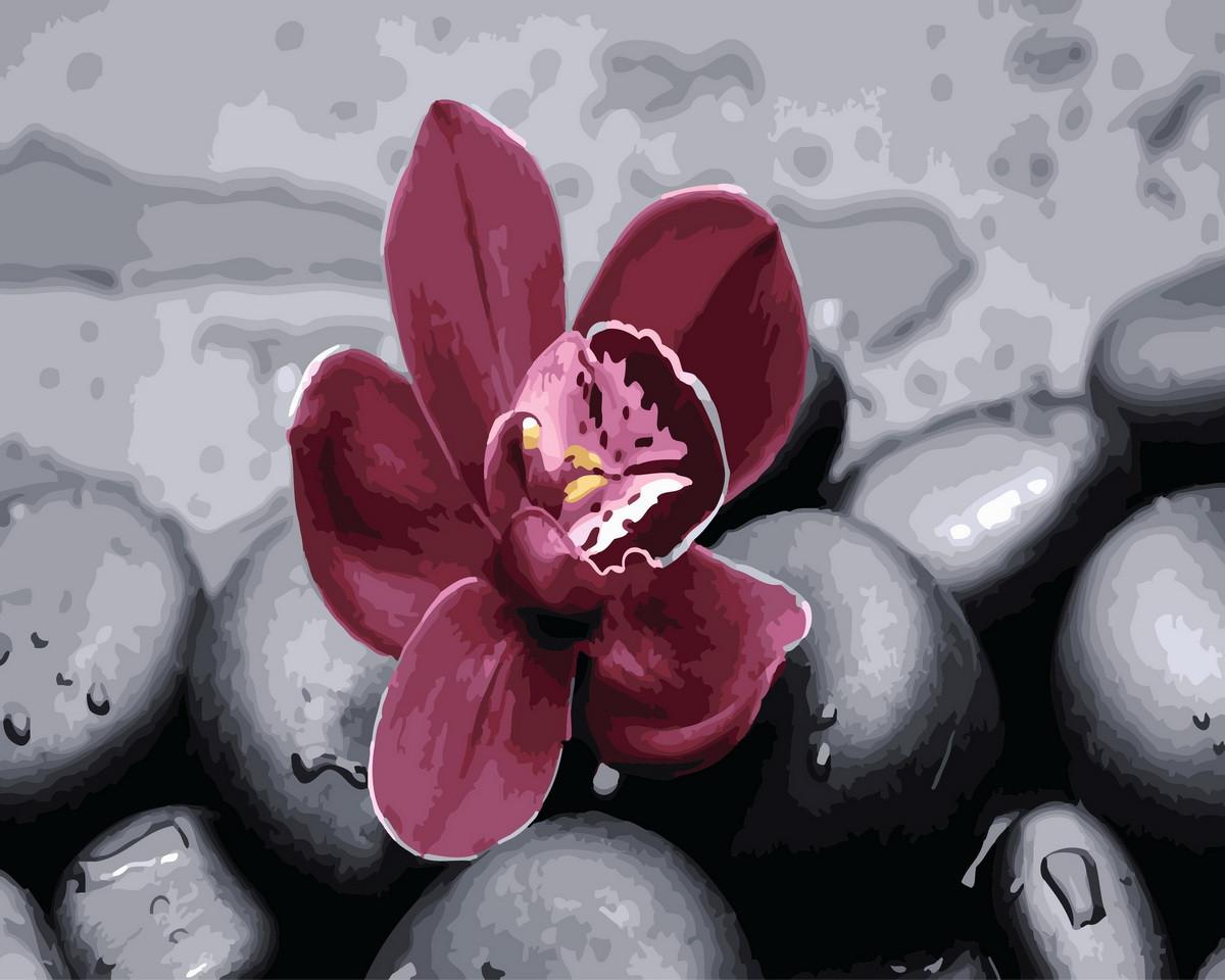 Картина по номерам  Орхидея на камнях, 40x50 см., Rainbow art
