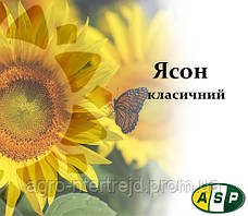 Семена подсолнечника ЯСОН Агроспецпроект