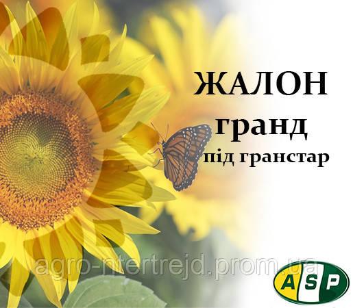 Семена подсолнечника Жалон Гранд Агроспецпроэкт