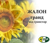 Семена подсолнечника Жалон Гранд Агроспецпроэкт, фото 1