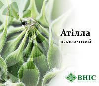 Семена подсолнечника АТИЛЛА  ВНИС, фото 1