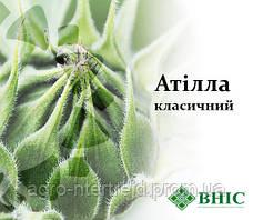 Семена подсолнечника АТИЛЛА  ВНИС