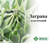 Семена подсолнечника ЗАГРАВА ВНИС, фото 1
