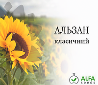 Семена подсолнечника Альзан, фото 1