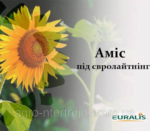 Семена подсолнечника ЕС Амис