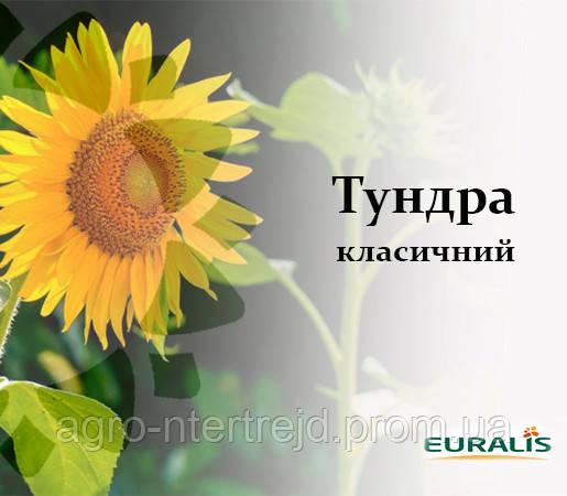Семена подсолнечника ЕС Тундра Евралис Семанс