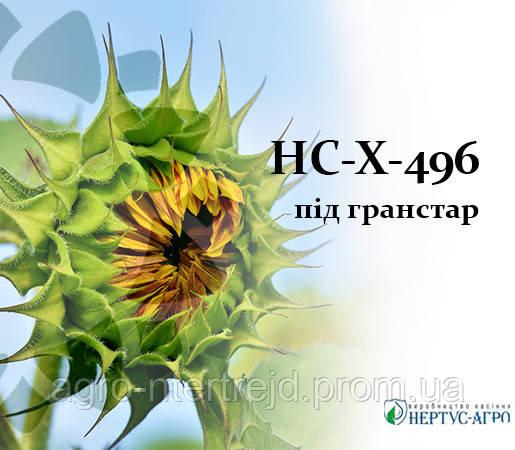Семена подсолнечника НС-Х-496 устойчивый к гранстару НЕРТУС  фр. Екстра 3.0-3.5
