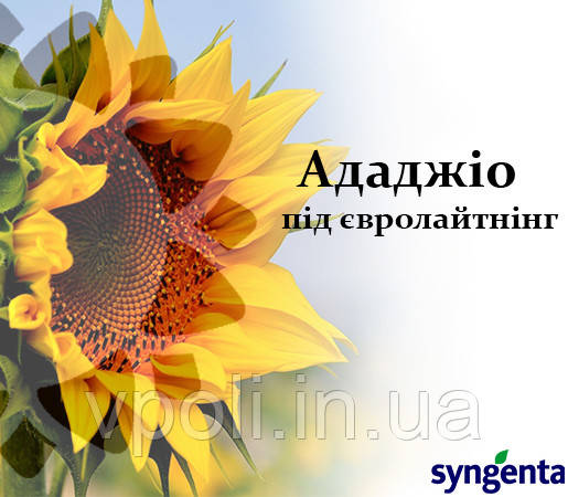 НК Ададжио семена подсолнечника Сингента под Евро Лайтинг