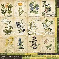 Карточки для декора №1 Botany summer (рус)