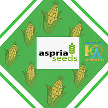 Насіння кукурудзи Aspria Seeds