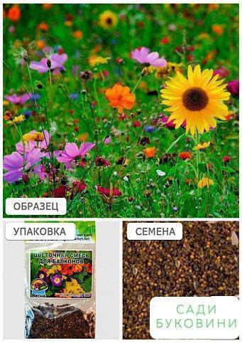 Цветочная смесь 'Для балконов' (Зипер) ТМ 'Весна' 4г