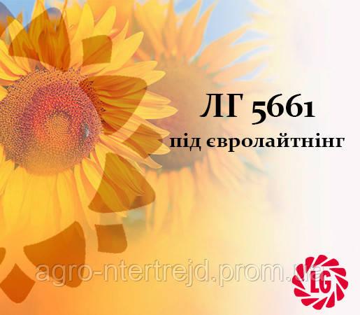 Семена подсолнечника ЛГ 5661 под Евро Лайтинг LIMAGRAIN (ЛИМАГРЕЙН)