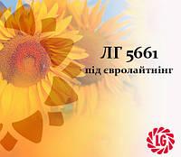 Семена подсолнечника ЛГ 5661 под Евро Лайтинг LIMAGRAIN (ЛИМАГРЕЙН), фото 1