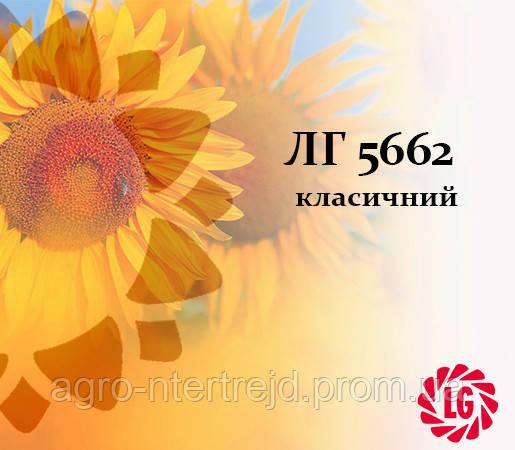 Семена подсолнечника ЛГ 5662 LIMAGRAIN (ЛИМАГРЕЙН)