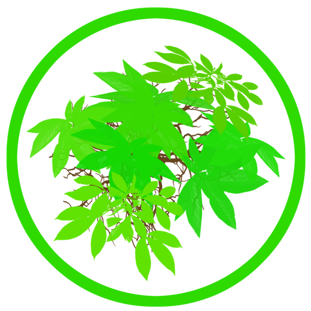Листья ветки