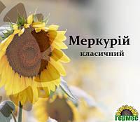 Семена подсолнечника Меркурий, фото 1