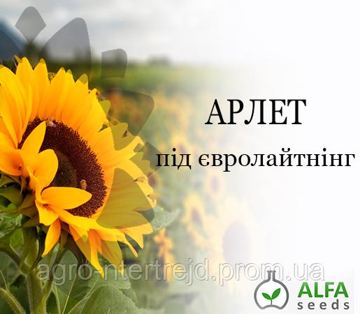 Семена подсолнечника Арлет (евролайтинг)