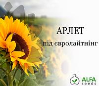 Семена подсолнечника Арлет (евролайтинг), фото 1