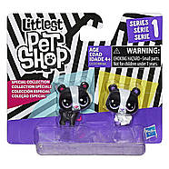 Littlest Pet Shop Медвежата Маленький зоомагазин  Black & White Bear, фото 2