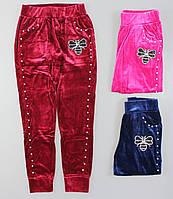 Спортивные брюки велюровые для девочек Seagull оптом, 134-164 pp. {есть:134,140,146,152,158}